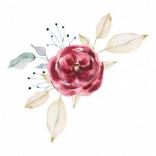 Красивые розы R30